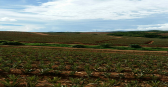 CityMax vende finca en Puntarenas apta para cultivo Piña
