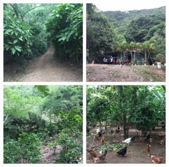 3.1 hectáreas de naturaleza en las montañas de Rio Oro de Santa Ana