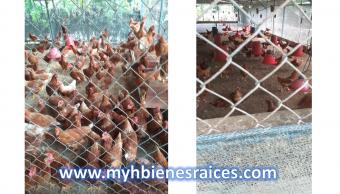 Granja Avícola y Terreno 5300 m2, con casa