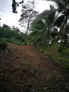 Propiedad Sarapiquí frente carretera principal