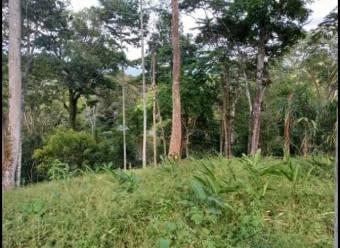 Hectarea Quepos