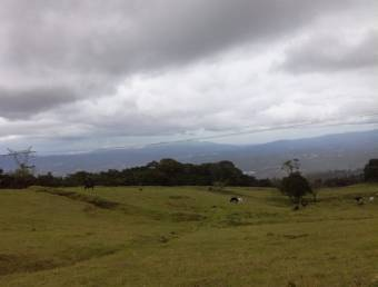 Farm, El Roble/Santa Barbara 18.7 hectares