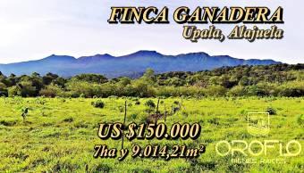 #FINCA_GANADERA EN VENTA #Upala #Alajuela #21306gr