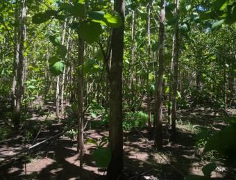 Se vende Propiedad de 450 hectáreas .finca ganadera sembrada teca