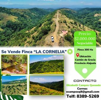 300ha farm for sale, has a spectacular primary forest