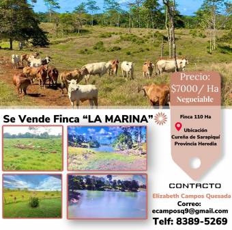 Finca LA MARINA PRICE US $ 7,000 / Ha (7 thousand dollars per hectare) of 110 Hectares