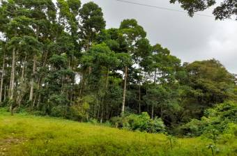 Venta de Finca en  Guacimo, Limon, Costa Rica 14 Hectares  (34.59 Acres)