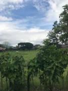 Se Venden 2 Lotes iguales en Montecillos de Alajuela
