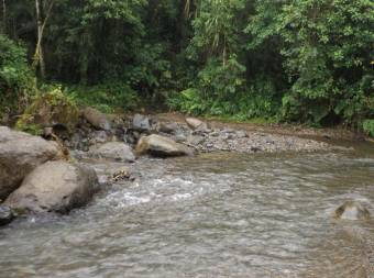 Vendo bella finca de 50 hectáreas, abundante agua en TURRIALBA