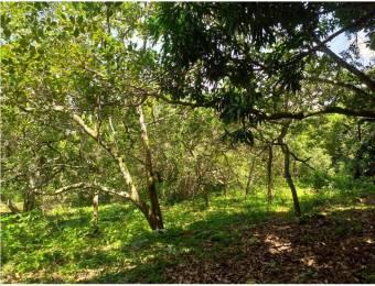 V#75 Espectacular Lote en venta/ San Mateo- Alajuela