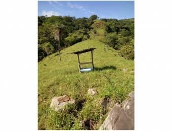 V#203 Majestuosa Finca en Venta para Inversión/Alajuela